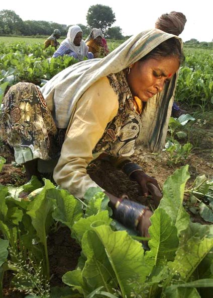 indian farmer in hindi 1 state of indian farmers: a report contents acknowledgements method note indian farmers: a socio-economic profile prevailing farming practices.